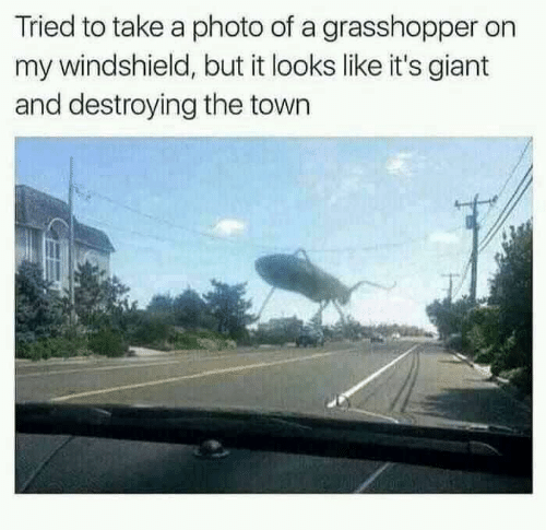 windshield: Tried to take a photo of a grasshopper on  my windshield, but it looks like it's giant  and destroying the town