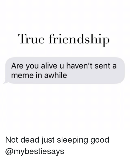 Girl Memes, Awhile, and  True Friendship: True friendship  Are you alive u haven't sent a  meme in awhile Not dead just sleeping good @mybestiesays