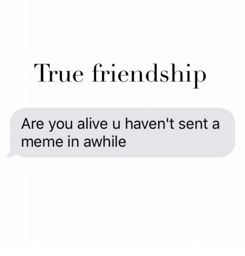 Memes, 🤖, and Awhile: True friendship  Are you alive u haven't sent a  meme in awhile