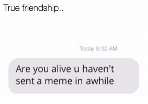 Memes, Friendship, and 🤖: True friendship  Today 8:32 AM  Are you alive u haven't  sent a meme in awhile