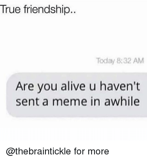 Alive, Meme, and True: True friendship  Today 8:32 AM  Are you alive u haven't  sent a meme in awhile @thebraintickle for more
