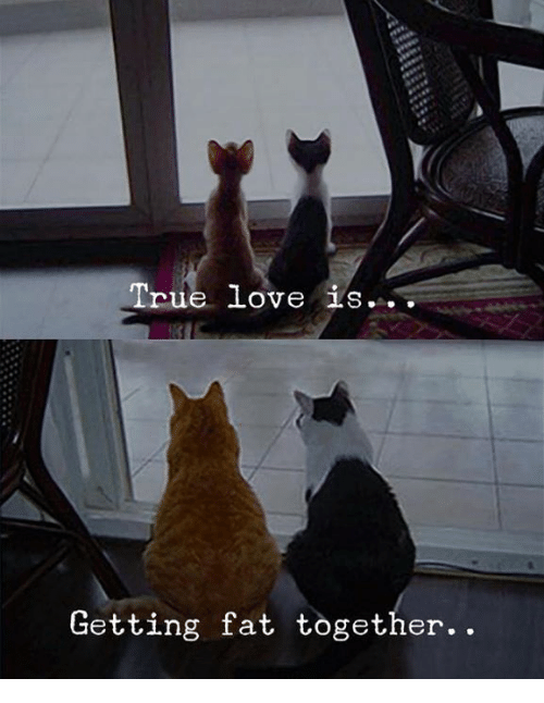 Love, True, and Fat: True love iS  Getting fat together..
