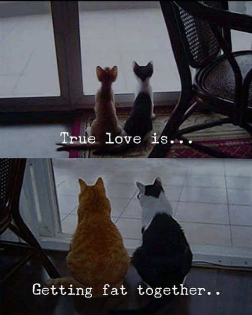 Aww Memes: True love is..  Getting fat together. .