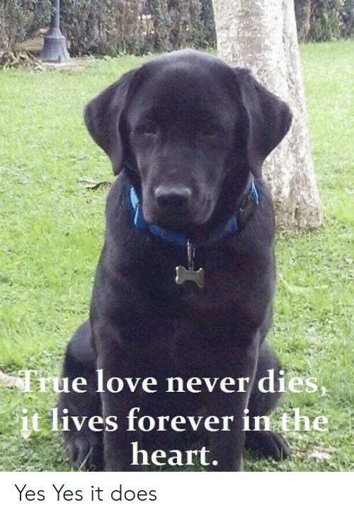 Love, Memes, and True: True love never dies,  it lives forever in the  heart. Yes Yes it does
