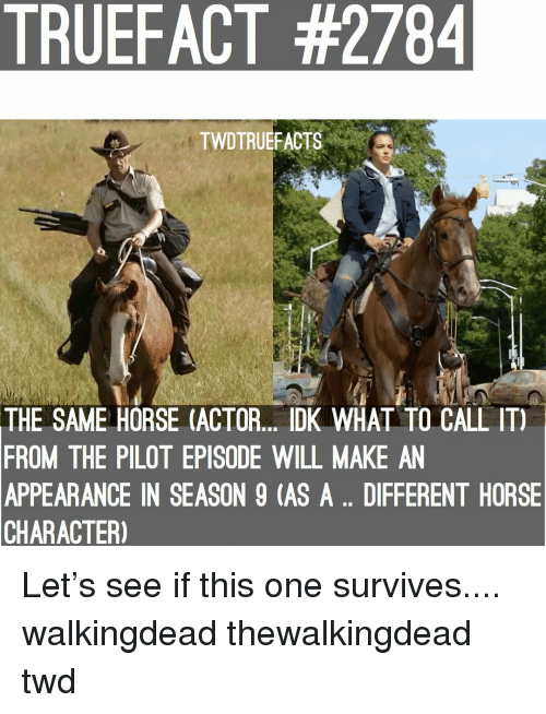 twd: TRUEFACT #2784  TWDTRUEFACTS  THE SAME HORSE (ACTOR. DK WHAL TO CALL IT)  FROM THE PILOT EPISODE WILL MAKE AN  APPEARANCE IN SEASON 9 (AS A.. DIFFERENT HORSE  CHARACTER) Let's see if this one survives.... walkingdead thewalkingdead twd