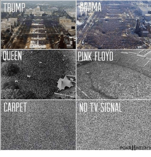 Pink Floyd, Queen, and Pink: TRUMP  AMA  QUEEN  PINK FLOYD  CARPET  NO TV SIGNAL