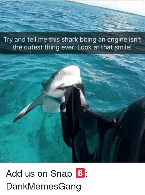 Memes, Shark, and Smile: Try and tell me this shark biting an engine isn't  the cutest thing ever. Look at that smile! Add us on Snap 🅱️:  DankMemesGang