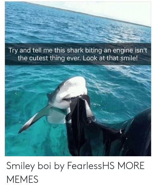 Dank, Memes, and Target: Try and tell me this shark biting an engine isn't  the cutest thing ever. Look at that smile! Smiley boi by FearlessHS MORE MEMES