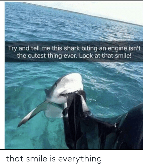 Shark, Smile, and Engine: Try and tell me this shark biting an engine isn't  the cutest thing ever. Look at that smile! that smile is everything