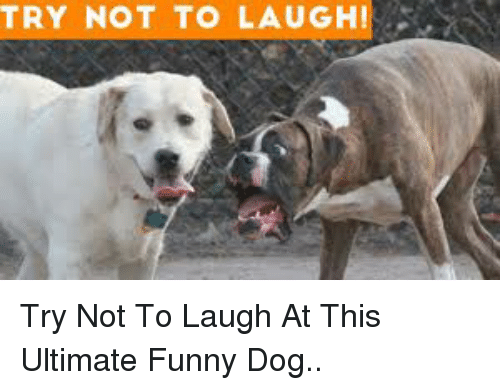 Funny, Dog, and This: TRY NOT TO LAUGHI