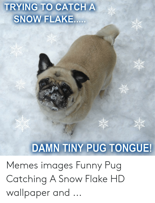 Funny Snow Memes: TRYING TO CATCH A  SNOW FLAKE  DAMN TINY PUG TONGUE! Memes images Funny Pug Catching A Snow Flake HD wallpaper and ...