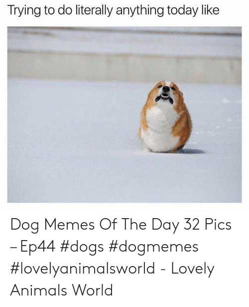 Animals, Dogs, and Memes: Trying to do literally anything today like Dog Memes Of The Day 32 Pics – Ep44 #dogs #dogmemes #lovelyanimalsworld - Lovely Animals World