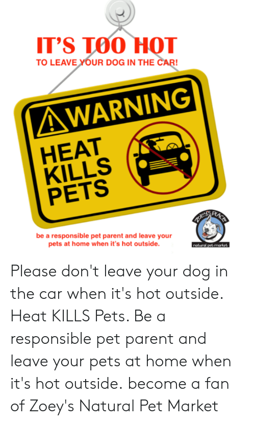 Memes, Pets, and Heat: T'S TOO HOТ  TO LEAVE YOUR DOG IN THE CAR!  AWARNING|  HEAT  KILLS  PETS  EASSRASS  LACE  ZOEYS  be a responsible pet parent and leave your  pets at home when it's hot outside.  naturd pet market Please don't leave your dog in the car when it's hot outside. Heat KILLS Pets. Be a responsible pet parent and leave your pets at home when it's hot outside.  become a fan of Zoey's Natural Pet Market