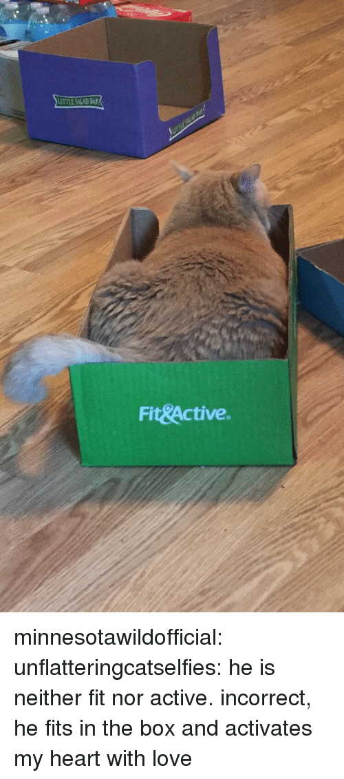 bap: TTLE SALAD BAP  Fit&Active. minnesotawildofficial:  unflatteringcatselfies: he is neither fit nor active.  incorrect, he fits in the box and activates my heart with love