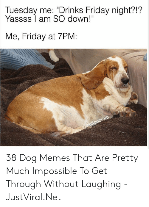 "Get Through: Tuesday me: ""Drinks Friday night?!?  Yassss I am SO down!""  Me, Friday at 7PM:  @hottoopretty 38 Dog Memes That Are Pretty Much Impossible To Get Through Without Laughing - JustViral.Net"