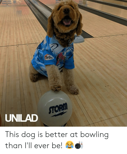 Dank, Bowling, and 🤖: Turbo  ENFLS  STORM  UNILAD This dog is better at bowling than I'll ever be! 😂🎳
