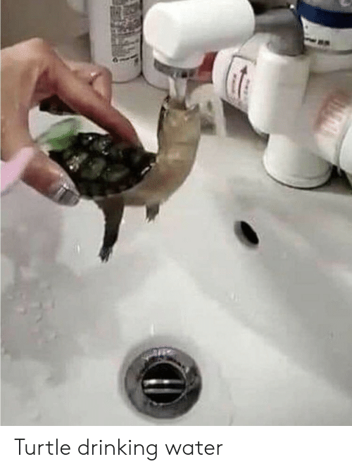 Drinking, Turtle, and Water: Turtle drinking water