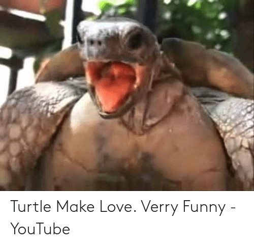 Verry Funny: Turtle Make Love. Verry Funny - YouTube