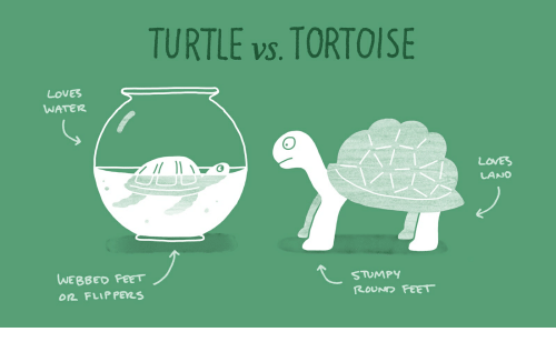 Image result for turtle vs tortoise feet