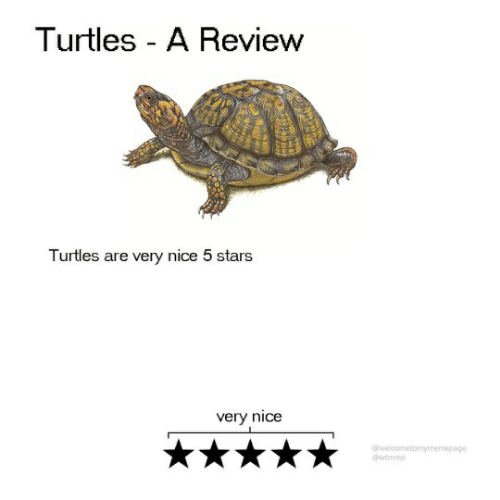Stars, Nice, and Turtles: Turtles - A Review  Turtles are very nice 5 stars  very nice  welcometomymemepage  @wtmmo