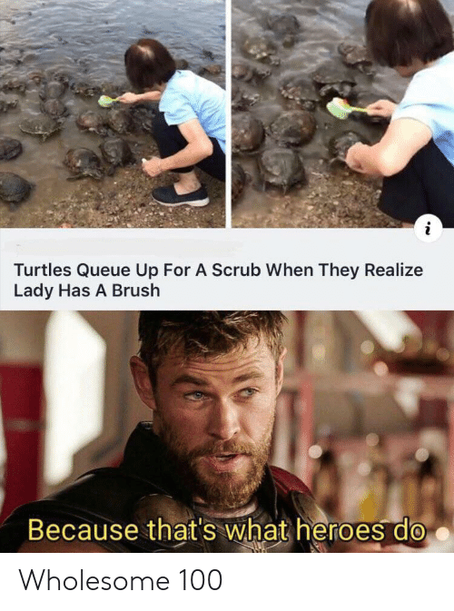 Thats What: Turtles Queue Up For A Scrub When They Realize  Lady Has A Brush  Because that's what heroes do Wholesome 100