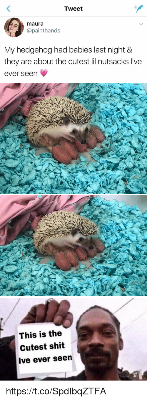 Shit, Hedgehog, and Girl Memes: Tweet  maura  @painthands  My hedgehog had babies last night &  they are about the cutest lil nutsacks l've  ever seen   This is the  Cutest shit  Ive ever seen https://t.co/SpdIbqZTFA