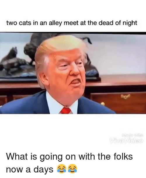 Cats, Funny, and What Is: two cats in an alley meet at the dead of night What is going on with the folks now a days 😂😂
