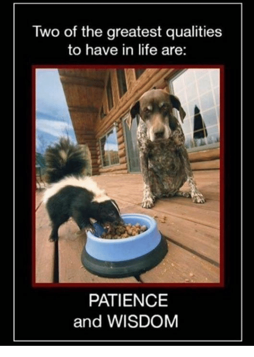 Life Memes And Patience Two Of The Greatest Qualities To Have In Life Are Patience And Wisdom