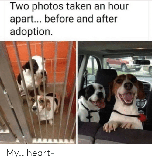Taken, Heart, and Photos: Two photos taken an hour  apart... before and after  adoption My.. heart-