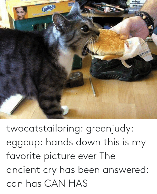 hands: twocatstailoring:  greenjudy: eggcup: hands down this is my favorite picture ever The ancient cry has been answered: can has  CAN HAS