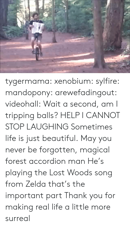 Wait A Second: tygermama: xenobium:  sylfire:  mandopony:  arewefadingout:  videohall:  Wait a second, am I tripping balls?  HELP I CANNOT STOP LAUGHING  Sometimes life is just beautiful.  May you never be forgotten, magical forest accordion man  He's playing the Lost Woods song from Zelda that's the important part   Thank you for making real life a little more surreal