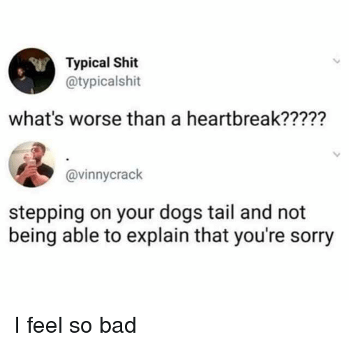 Bad, Dogs, and Shit: Typical Shit  @typicalshit  what's worse than a heartbreak?????  @vinnycrack  stepping on your dogs tail and not  being able to explain that you're sorry I feel so bad