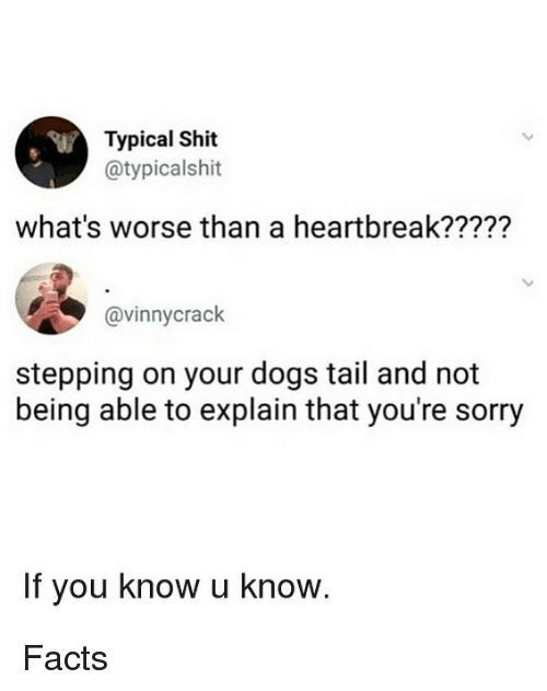 Dogs, Facts, and Memes: Typical Shit  @typicalshit  what's worse than a heartbreak?????  @vinnycrack  stepping on your dogs tail and not  being able to explain that you're sorry  If you know u know. Facts