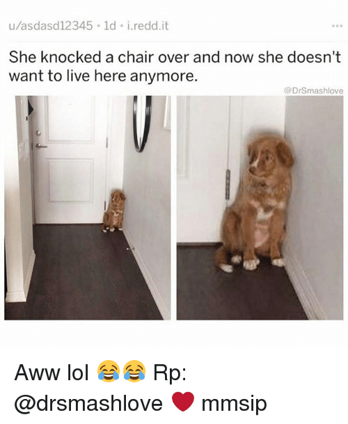 Aww, Lol, and Memes: u/asdasd12345 ld i.redd.it  She knocked a chair over and now she doesn't  want to live here anymore.  @DrSmashlove Aww lol 😂😂 Rp: @drsmashlove ❤ mmsip
