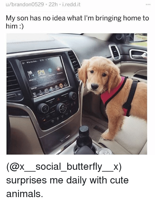 Animals, Cute, and Cute Animals: u/brandon0529 22h i.redd.it  My son has no idea what I'm bringing home to  him:) (@x__social_butterfly__x) surprises me daily with cute animals.
