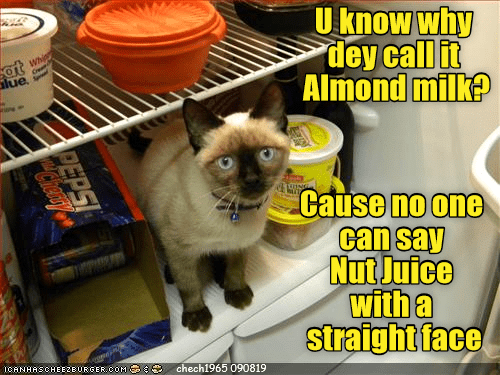 whip: U know why  dey call it  Almond milk?  Whip  at  lue  Cause no one  can say  Nut Juice  with a  straight face  ICANHASCHEE2EURGER cOM  chech1965 090819