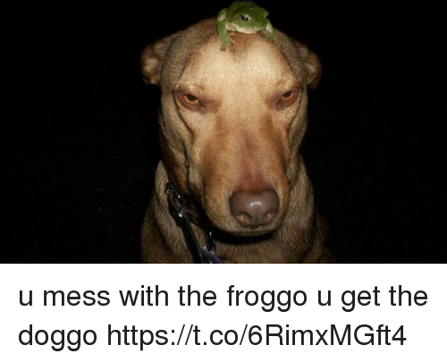 Funny, Doggo, and Mess: u mess with the froggo  u get the doggo https://t.co/6RimxMGft4