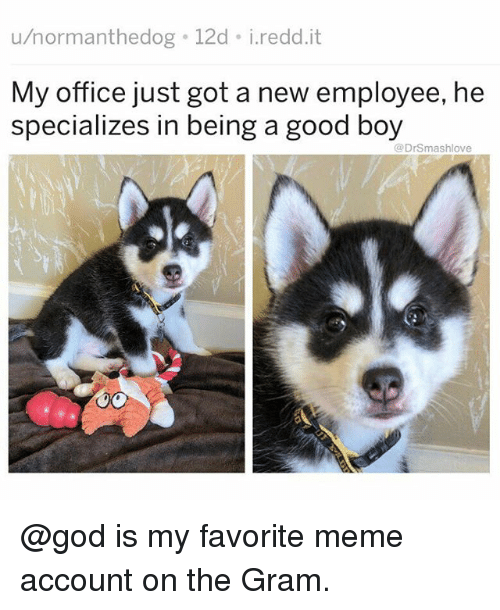 God, Meme, and Memes: u/normanthedog 12d i.redd.it  My office just got a new employee, he  specializes in being a good boy  @DrSmashlove @god is my favorite meme account on the Gram.