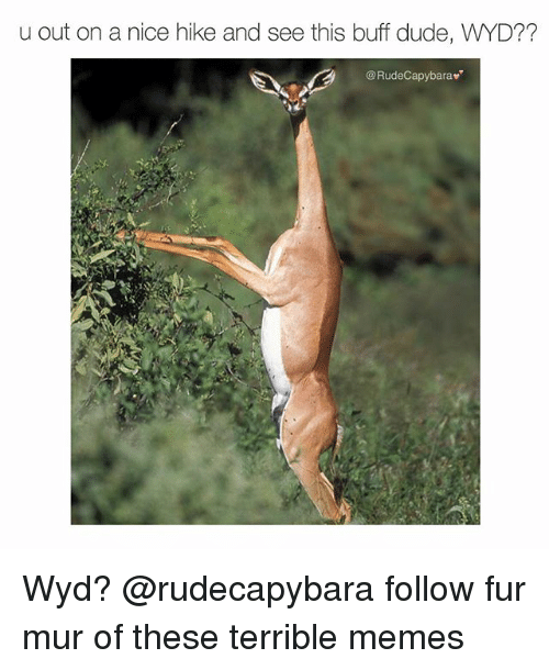 Duded: u out on a nice hike and see this buff dude, WYD??  @RudeCapybarav Wyd? @rudecapybara follow fur mur of these terrible memes