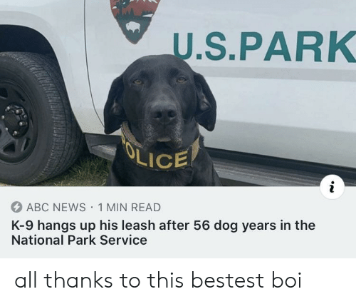 U S: U.S.PARK  OLICE  ABC NEWS 1 MIN READ  K-9 hangs up his leash after 56 dog years in the  National Park Service all thanks to this bestest boi