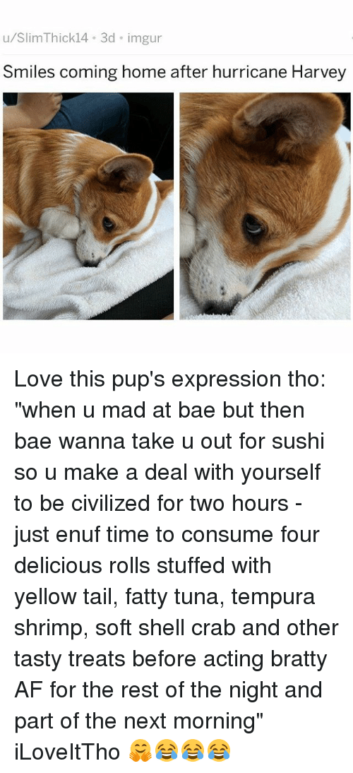 "afs: u/SlimThick14 3d imgur  Smiles coming home after hurricane Harvey Love this pup's expression tho: ""when u mad at bae but then bae wanna take u out for sushi so u make a deal with yourself to be civilized for two hours - just enuf time to consume four delicious rolls stuffed with yellow tail, fatty tuna, tempura shrimp, soft shell crab and other tasty treats before acting bratty AF for the rest of the night and part of the next morning"" iLoveItTho 🤗😂😂😂"