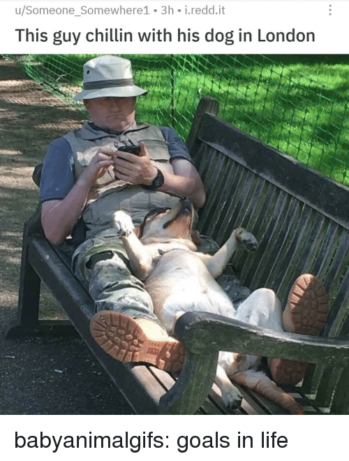 Goals, Life, and Tumblr: u/Someone_Somewhere1 3h i.redd.it  This guy chillin with his dog in London babyanimalgifs:  goals in life