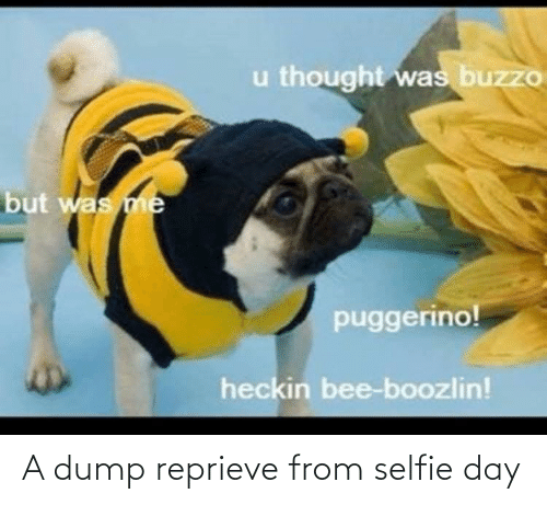 bee: u thought was buzzo  but was me  puggerino!  heckin bee-boozlin! A dump reprieve from selfie day