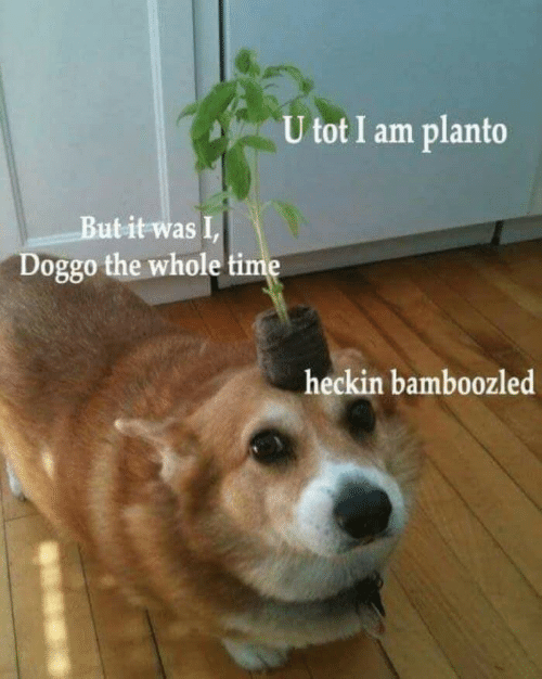 Heckin: U tot I am planto  But it was I,  Doggo the whole time  heckin bamboozled