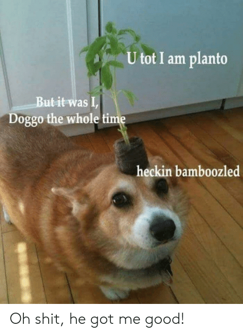 Heckin: U tot I am planto  Butit was I  Doggo the whole time  heckin bamboozled Oh shit, he got me good!
