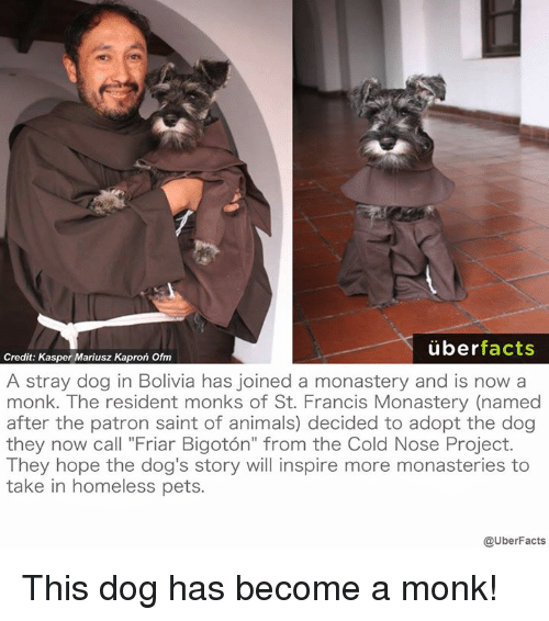 """Patrone: uber  facts  Credit: Kasper Mariusz Kapron Ofm  A stray dog in Bolivia has joined a monastery and is now a  monk. The resident monks of St. Francis Monastery (named  after the patron saint of animals) decided to adopt the dog  they now call """"Friar Bigoton"""" from the Cold Nose Project.  They hope the dog's story will inspire more monasteries to  take in homeless pets.  @UberFacts This dog has become a monk!"""
