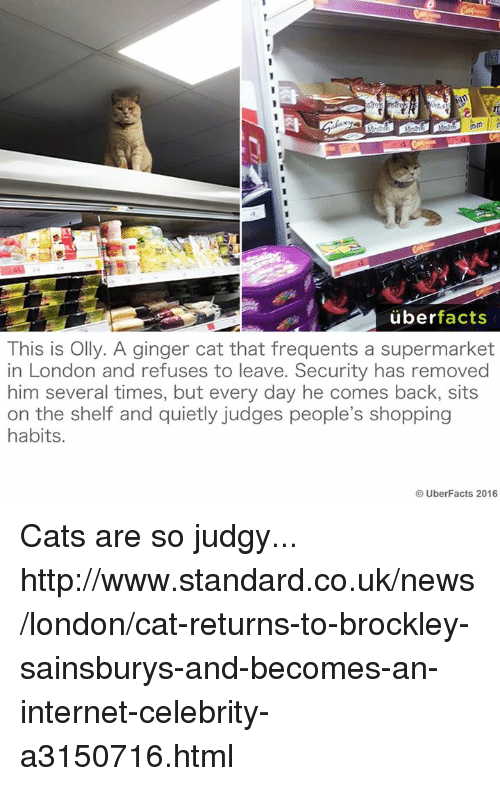 cat returns: uber  facts  This is Olly. A ginger cat that frequents a supermarket  in London and refuses to leave. Security has removed  him several times, but every day he comes back, sits  on the shelf and quietly judges people's shopping  habits  UberFacts 2016 Cats are so judgy...  http://www.standard.co.uk/news/london/cat-returns-to-brockley-sainsburys-and-becomes-an-internet-celebrity-a3150716.html