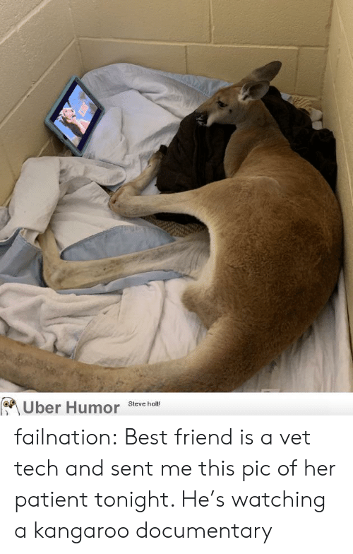 Best Friend, Tumblr, and Uber: Uber Humor  Steve holt! failnation:  Best friend is a vet tech and sent me this pic of her patient tonight. He's watching a kangaroo documentary