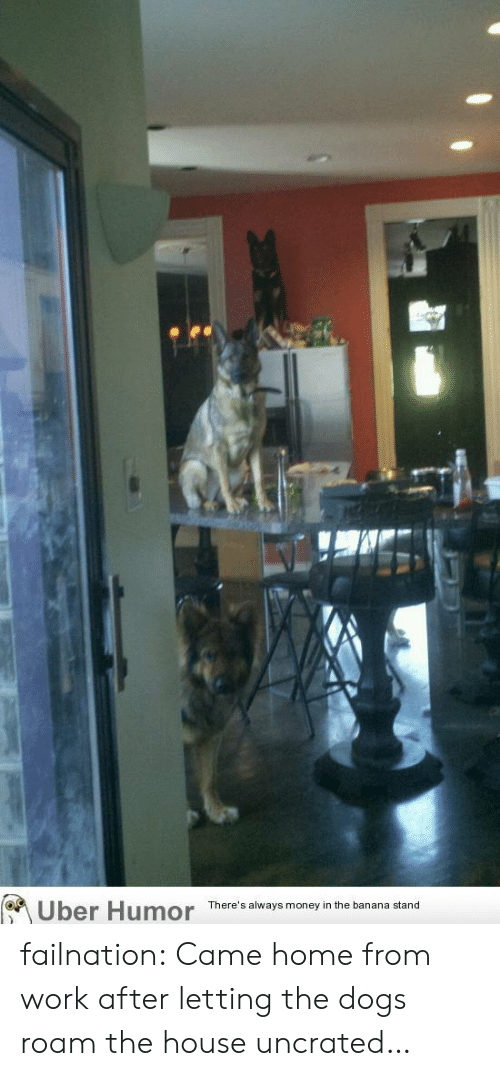 Dogs, Money, and Tumblr: Uber Humor  There's always money in the banana stand failnation:  Came home from work after letting the dogs roam the house uncrated…