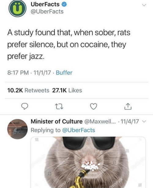 Cocaine, Sober, and Silence: UberFacts  @UberFacts  A study found that, when sober, rats  prefer silence, but on cocaine, they  prefer jazz.  8:17 PM . 11/1/17 Buffer  10.2K Retweets 27.1K Likes  Minister of Culture @Maxwell.. 11/4/17  Replying to @UberFacts